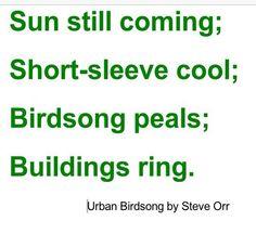 Urban Birdsong