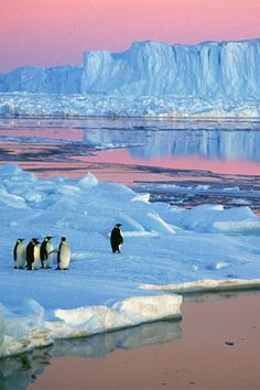 Antarctica is still the trip of a lifetime, 100 years after Shackleton's heroic journey. #FodorsGoList
