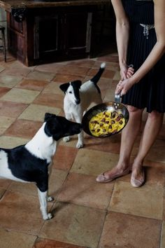 Two delicious recipes and four air-tight reasons why it's worth it to cook for your dogs