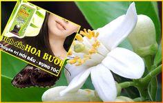 Tinh dầu hoa bưởi [chuyên trị hói, tóc thưa, trị gàu..] ~> 300,000đ [ giá gốc 400,000đ].  Chi tiết xem tại http://vietpages.com.vn/22/36/TINH-DAU-HOA-BUOI.aspx
