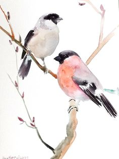 Bullfinch, original watercolor painting, 12 X 9, male and female bullfinch, bird lover gift