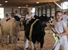 Katherine Maus walks her calf out of the showing area at the Stearns County Fair in Minnesota.