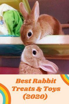 Best Rabbit Treats & Toys (2020) Rabbit Behavior, Bunny Supplies, Rabbit Treats, Boredom Busters, Wood Toys, Cute Bunny, Habitats, Bunnies, Animals