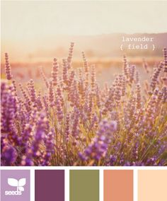 Maybe I'll change my living room wall color from garnet to dark lavender... hmm.