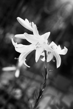 Flowers Dandelion, Flowers, Plants, Photography, Image, Photograph, Dandelions, Fotografie, Photoshoot
