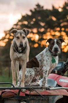 Equine portrait photographer based in New Zealand. Portrait Photographers, New Zealand, Dogs, Photography, Animals, Photograph, Animales, Animaux, Pet Dogs