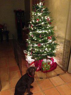 Handmade Fence Dog Proofing Christmas Tree Saving The
