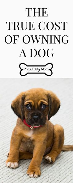 Thinking of getting a new puppy? Check out this dog infographic to see the true cost of owning a dog | dog tips |