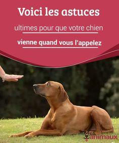 Come prevenire l'aggressività nel vostro cane Puppies Tips, Dogs And Puppies, Education Canine, Dog Quotes, Cocker Spaniel, Pet Health, Pet Accessories, Dog Care, Beautiful Dogs