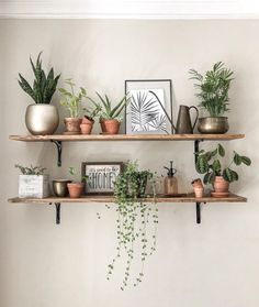 Some DIY shelves and a lot of greenery makes me SMILE! My new favorite wall! We don't get a whole lot of sun in our apartment but it's… Indoor Plant Wall, Plant Wall Decor, House Plants Decor, Tv Wall Decor, Hanging Plant, Plant Shelves, Shelves With Plants, Tv Wall Shelves, Floating Bookshelves