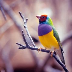 Top 10 Rare Colorful Birds Around the World, Wayside by Karisca