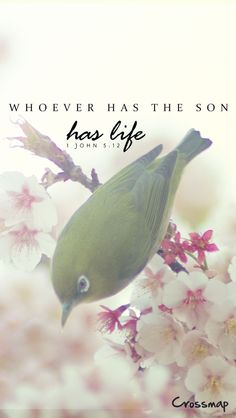 Whoever has the Son has life; whoever does not have the Son of God does not have life. -1 John 5:12♥
