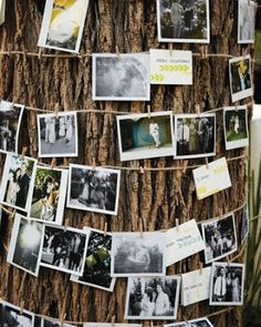 Love this for an outdoor party. To display my senior pictures at my grad party