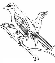 Small Birds With Feathers Beautiful Birds Bird