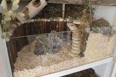 [Sonstiges] Die Hamster-Vitrine (140x50 auf zwei Ebenen) - Gehegevorstellung - www.das-hamsterforum.de