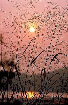 Sunrise Through The Tall Grass Canvas Print / Canvas Art by Thomas Firak
