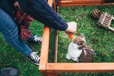 Nearie & George's back garden engagement photos   Mustard Yellow Photography #engagement #rabbit