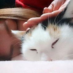 #lnstacat#instacats#instacatsworld#nyanstagram#ねこ#ネコ#猫#きゃっと#cat#にゃおん#猫ちゃん#愛猫#猫好きな方#猫好きと繋がりたい#愛猫家#拡散希望#天使#にゃん#にゃんず#にゃんすたぐらむ#ねこちゃん#ぴい#寝起き#ってか起こした#眠そう#おはよう#夜だよ