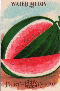 Juicy sweet watermelon.