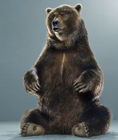 Portraits of bears by Jill Greenberg