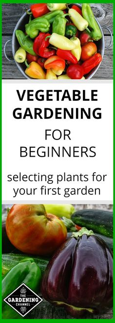 Learn how to select plants for your first vegetable garden. Learn which vegetable plants are easy to grow and how to save money by gardening.
