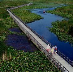 Beautiful Point Pelee National Park in Ontario Canada. Oh The Places You'll Go, Great Places, Places To Travel, Beautiful Places, Places To Visit, Parks Canada, Canada Eh, Westminster, Ontario Travel