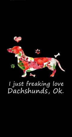 Dachshund Humor, Dachshund Quotes, Daschund, Dachshund Puppies, Dachshund Love, Oscar Mayer, Anime Animals, Dog Food, Adorable Animals