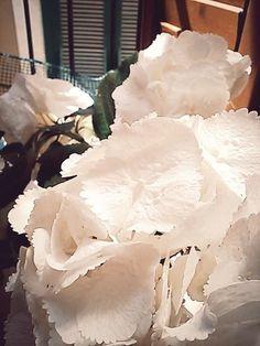 white hydrangea/ ortensia bianca