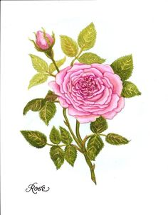 Custom Made Watercolor Painting Of A Pink Rose For June's Birthday Flower