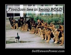 """Be Free be Bold -     Freedom lies in being bold."""" – Robert Frost"""