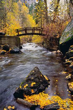 Footbridge in the fall on Mount Timpanogos. Wasatch Mountains, Utah. Photo by David Schultz