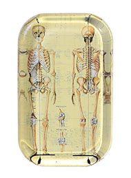 Skeletal  Anatomy X-Ray Paperweight