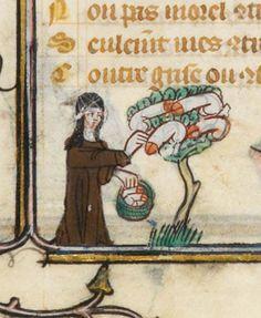 nun plucks penises off a phallus tree in the Roman de la Rose, c. 1325-1353. (Paris, Bibliothèque nationale de France, MS. Fr. 25526, f. 106v.)