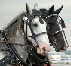 breyer draft horses - Google Search
