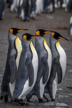 order must be kept Photo by david menaker -- National Geographic Your Shot