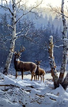 Persis Clayton Weirs River of Gold- Whitetail Deer – Winterbilder Wildlife Paintings, Wildlife Art, Animal Paintings, Animal Drawings, Deer Paintings, Drawing Animals, Deer Pictures, Animal Pictures, Nature Animals