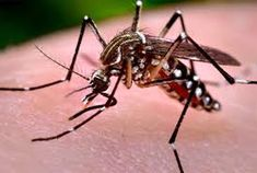 Are you looking for mosquito control treatment in Singapore? Then you can visit one of the reliable platforms i.e. Inavab Fumigation.