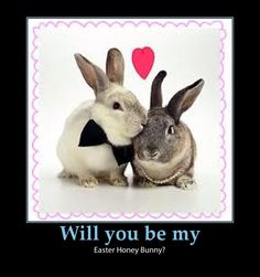 funny easter pictures jokes Easter Bunny Jokes, Funny Easter Jokes, Funny Easter Pictures, Cutest Bunny Ever, Adorable Bunnies, Baby Animals, Cute Animals, Pets 3, Cuddly Pets