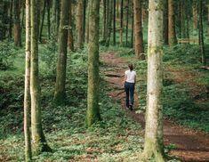 Workshop, Einkehr, Wald, Waldbaden, November, Besinnlich, Energie, Kontemplation, Meditation, Nidra, Runde, Räucherung, Harze, Kräuter, Ruhe