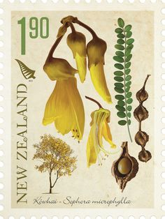 New Zealand Native Trees Stamp Issue for New Zealand Post New Zealand Art, Nz Art, Flower Stamp, Vintage Stamps, Cursed Child Book, Botanical Illustration, Art Projects, Painting, Image