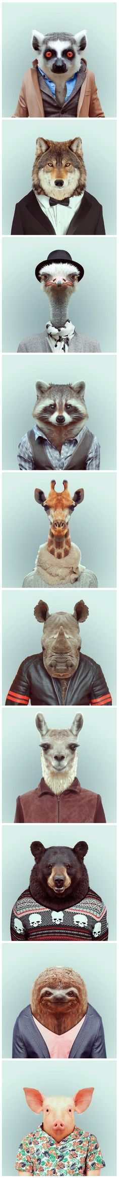 Funny pictures about Funny portraits of animals dressed like humans. Oh, and cool pics about Funny portraits of animals dressed like humans. Also, Funny portraits of animals dressed like humans. Funny Animals, Cute Animals, Photocollage, Tier Fotos, Animal Heads, Pet Clothes, Animals In Clothes, Fancy Clothes, Pet Portraits