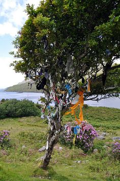 A clootie tree.  It is an ancient tradition to tie a colored rag or ribbon around a tree branch as a sort of offering or prayer (traditionally a healing wish).  As the legend goes, when the rag eventually comes loose or disintegrates, the wish is granted. Here's a find article about clootie trees: http://lostandfoundbymaeve.blogspot.com/2011/06/clootie-tree.html