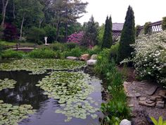 Monet like reflections in spring at Stonehouse Farm, Maine