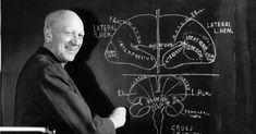 """Wilder Penfield was a Canadian neurosurgeon who created pioneering maps of the brain, which he referred as the """"homunculus"""" (motor cortex on the right, somatosensory on the left). Motor Cortex, Homunculus, Forensic Science, Google Doodles, Neurology, Psychology, Mindfulness, Birthday, Strawberry Fields"""