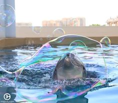 Winter from the Clearwater Marine Aquarium. Winter the Dolphin with the prosethic tail. Funny Dolphin, Dolphin Tale, Best Pictures Ever, Funny Pictures, Random Pictures, Funny Pics, Funny Quotes, Animals Beautiful, Cute Animals