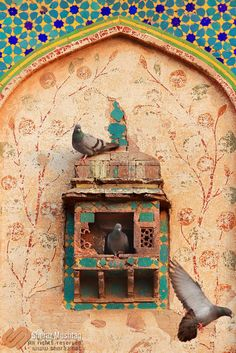 by Sheraz Mushtaq on 3 pigeons on old Mughal Era Building. Persian Architecture, Cultural Architecture, Art And Architecture, Iran Pictures, Iranian Art, Calligraphy Art, Islamic Art, Pigeon, Cute Wallpapers
