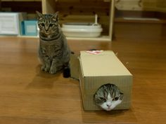 Maru (in the box, of course) and side-kick Hana :)