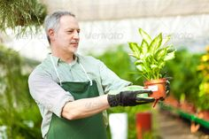 Realistic Graphic DOWNLOAD (.ai, .psd) :: http://sourcecodes.pro/pinterest-itmid-1007098086i.html ... Man in a Greenhouse ...  business, clerk, garden, gardening, green, greenhouse, job, male, man, market, people, person, plant, pot, senior, shop, shopkeeper, spring, summer, work, worker  ... Realistic Photo Graphic Print Obejct Business Web Elements Illustration Design Templates ... DOWNLOAD :: http://sourcecodes.pro/pinterest-itmid-1007098086i.html