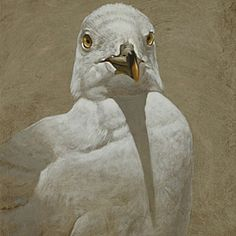 William Wolk | MIXED MEDIA | Portrait of Gull