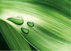 Desktop Wallpaper Piece of fresh green leaves with water drops HD for PC, Mac, Laptop, Tablet, Mobile Phone